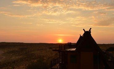 Kgalagadi safari
