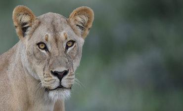 Etosha Photographic safari
