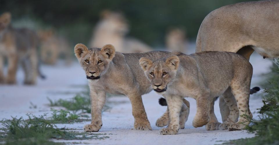 Kalahari Photographic safari
