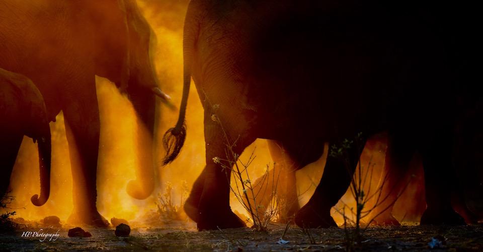 Etosha Okavango Khoi and San Safari
