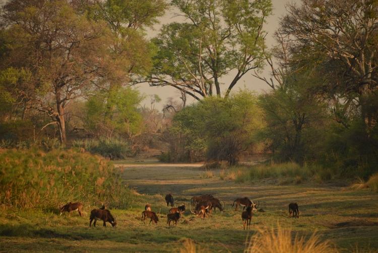 14 Day Four rivers safari
