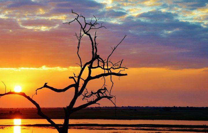 okavango lodge safari
