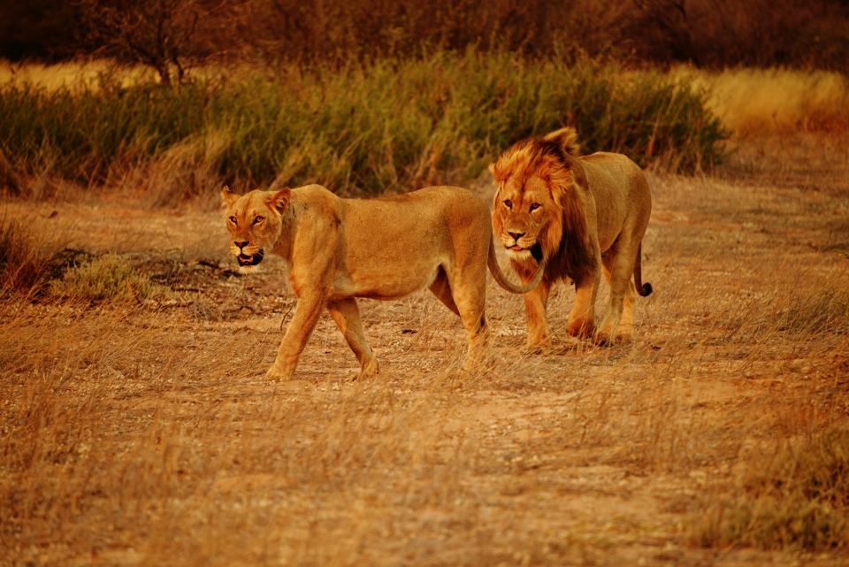 kgalagadi Camping safari