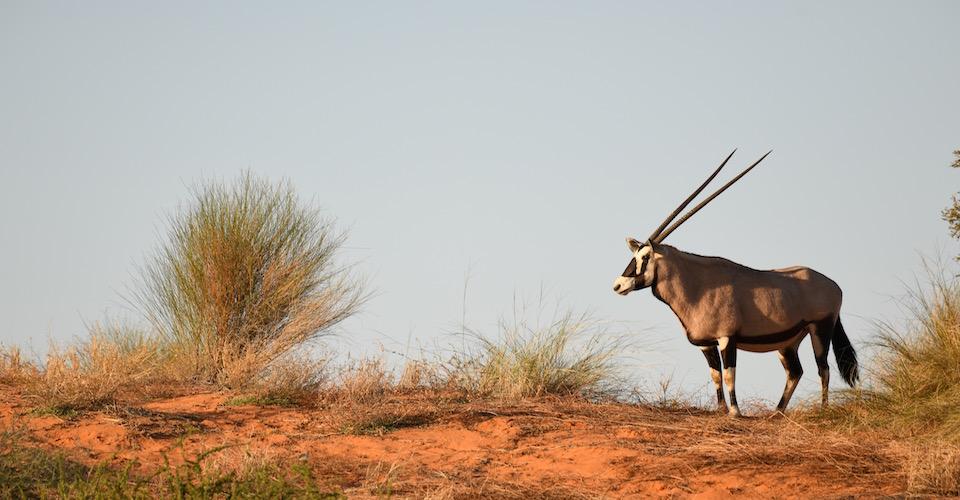 Kalahari Crossing