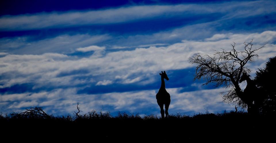Kalahari Lodge Safari