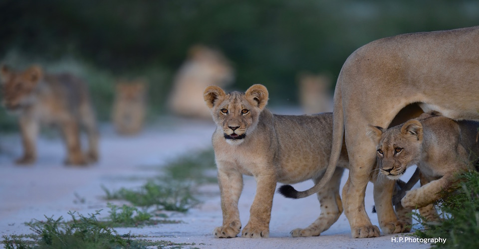 10 day kalahari lodge safari