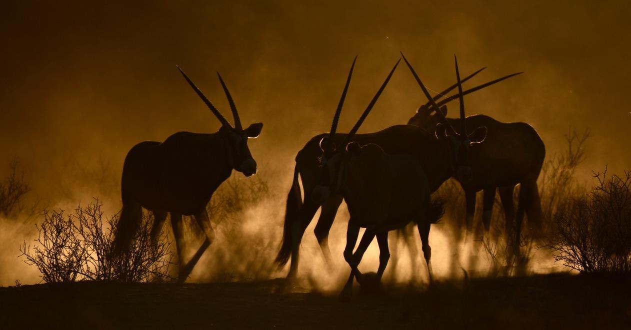 The Kalahari and Richtersveld