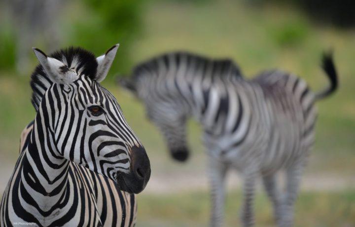 10 Day Wilderness Safari