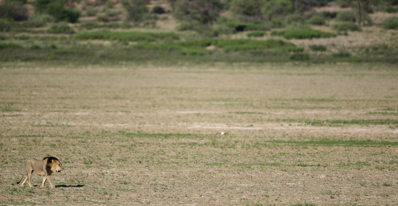 Mabuasehube the forgotten land of Botswana